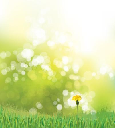 Fondo de primavera de vector con diente de León amarillo. Ilustración de vector
