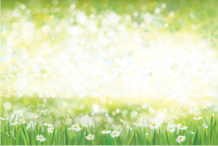 Vector summer, green, nature  background, chamomiles field. Archivio Fotografico - 125607810