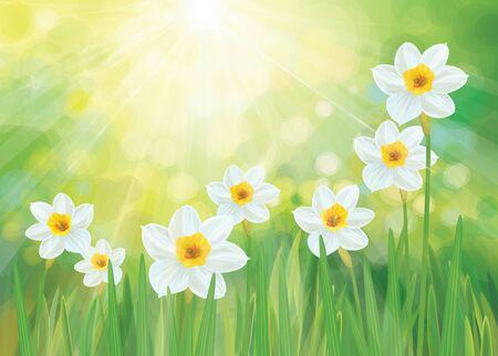 Vector daffodil flowers. Spring background. Ilustracje wektorowe