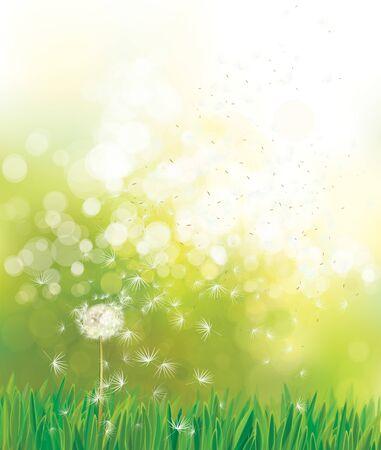 Vector spring green background, white dandelion in sunshine.