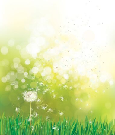Vektorfrühlingsgrüner Hintergrund, weißer Löwenzahn im Sonnenschein.