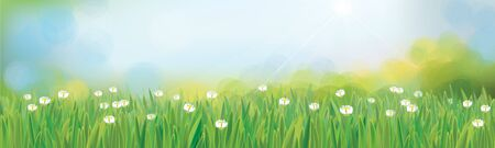 Vector summer,  nature background, blue sky and green grass.