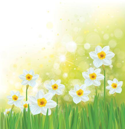 Fleurs de jonquille de vecteur. Fond de printemps.