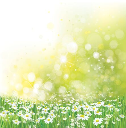 Vector summer,  nature background. Daisy flowers in sunshine.