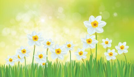Vector daffodil flowers. Spring  background. Иллюстрация