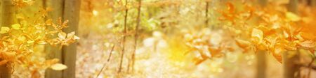 Autumnal  leaves branches, golden autumn, bokeh background. Nature autumnal background. Autumnal forest. Фото со стока