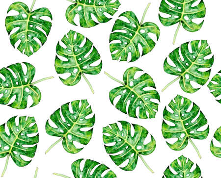 Monstera leaves seamlees pattern, isolated on white. Watercolor illustration. Фото со стока