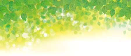 Vector green leaves bokeh background. Green nature background.
