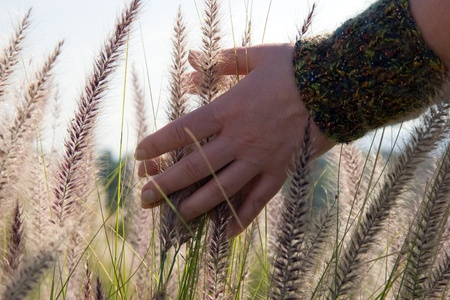Woman hands touches the grass  Woman s hand touching blades of tall grass