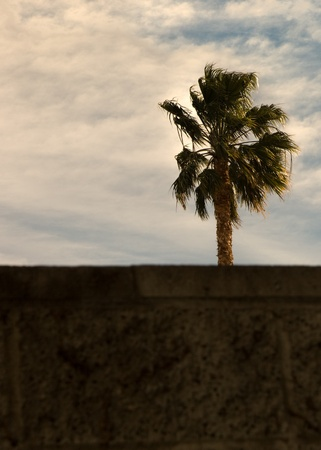 Blurred wall with a palm in the background  Stock Photo