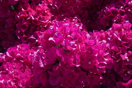 papery: ornamental plants - papery flowers Stock Photo