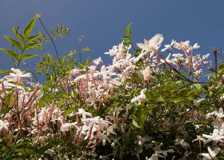 scrub of flowers