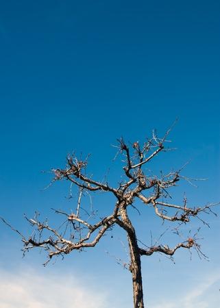 Strange- tree  写真素材