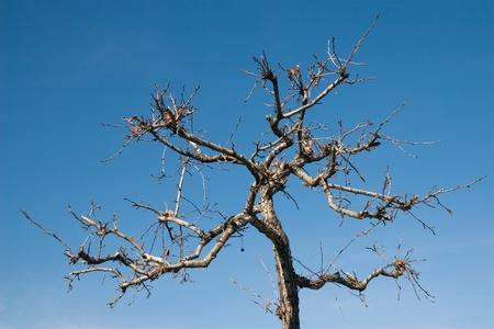 Strange-tree Stock Photo - 12840732