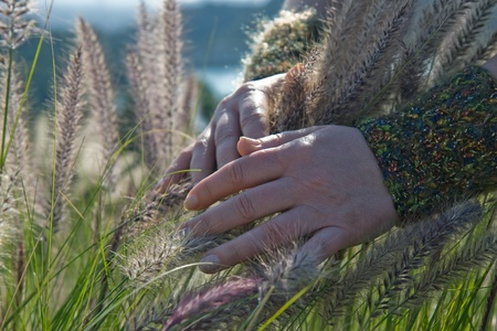 Woman s hand brushes against blades of tall grass
