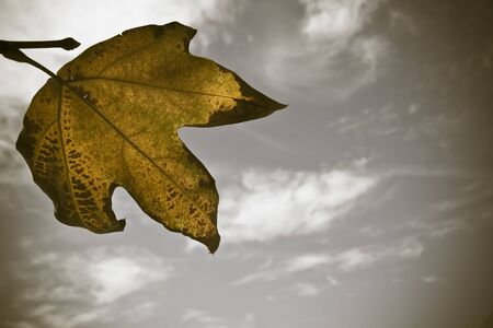 Leaf in front of the sky Stock Photo