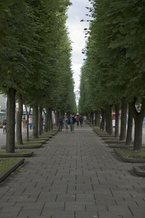 Alley of trees in front of Church photo