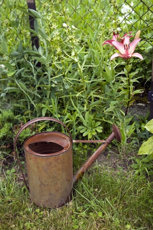 An old galvanized metal watering can close to red flower