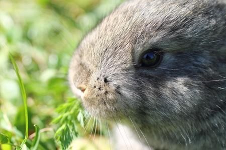 bunnie: Rabbit in blur