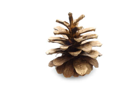 Pinecone on white background photo