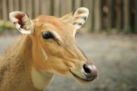 Wild deer close-up photo