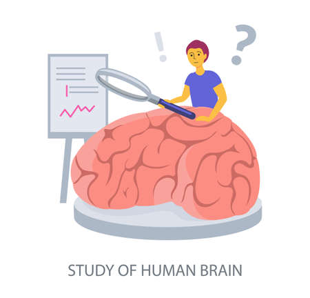 Study of Human Brain concept on white background, flat design vector illustration 矢量图像