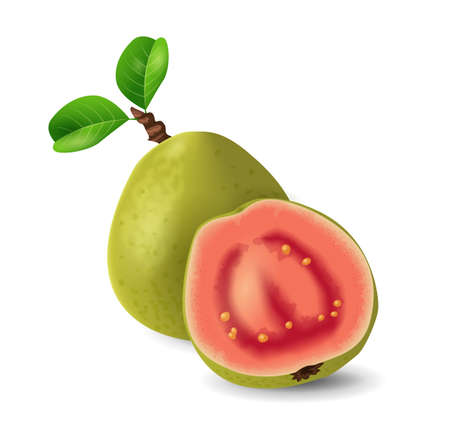 Guava fruit - exotic fruits collection, realistic design vector illustration close-up Illustration