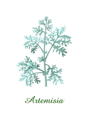 Artemisia plant, green grasses herbs and plants collection, realistic vector illustration