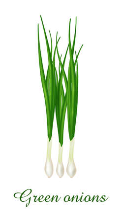 Green Onion plant, food green grasses herbs and plants collection, realistic vector illustration