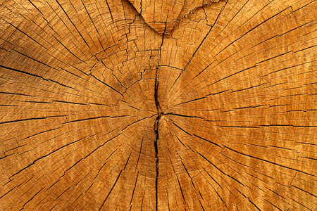 Texture background of wooden log close-up