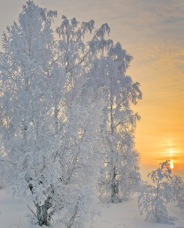 Cold winter day, beautiful trees snow and hoarfrost covered  Golden color of sunset photo