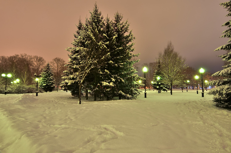 snowlandscape: Fir trees covered with snow in the soft light of lanterns stand in the park in anticipation of Christmas. Stock Photo