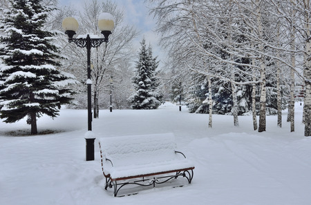 hristmas: Winter city park landscape with snow covered Сhristmas tree, bench and lantern