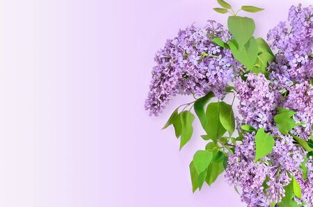 lilac: Beautiful floral spring background with Lilac flowers bouquet and free space for text Stock Photo
