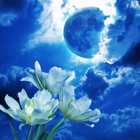 letras musicales: brillante luna llena entre las nubes esponjosas en el cielo nocturno brilla la luz azul de los tulipanes flores blancas - hermoso fondo romántico. Este collage de fotos puede ser utilizado para las cubiertas de CD de música, libros sobre el amor, letras poéticas, etc.
