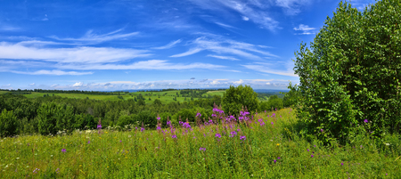 Summer panoramic landscape of flowering meadows with pink, white and yellow flowers, medicinal and melliferous plants on a background of hills forests covered and blue sky with clouds