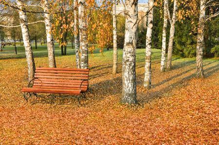 Bright colorful autumn landscape in city park, wooden bench under the white birch trees on the carpet of orange fallen leaves at sunny day Stock Photo