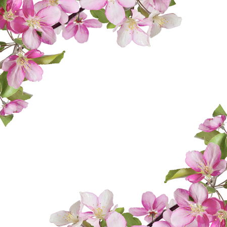 Floral frame with branches of cherry or apple tree with pink flowers and leaves in corners and space for text. Beautiful design for spring greeting card, banner or design of napkin, hanky Stock Photo