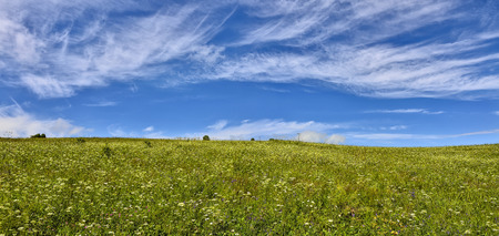 Sunny summer landscape - panorama of blossoming meadow with various fragrant medicinal herbs under the blue sky with beautiful white clouds
