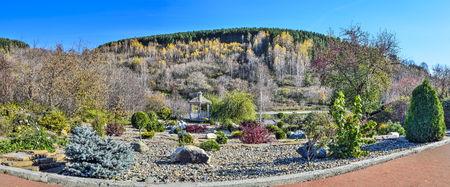 Colorful dwarf coniferous trees, bushes and flowers among stones in autumn garden and wooden arbor in the shade of spreading willows. Beautiful landscape design at the foot of hill with forest covered at sunny day