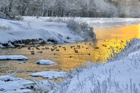 Winter golden sunset and fog over little warm river with ducks floating in the water. Frosty weather, trees and grass on the banks are covered with fluffy hoarfrost - fairy tale of wintert landscape Stockfoto