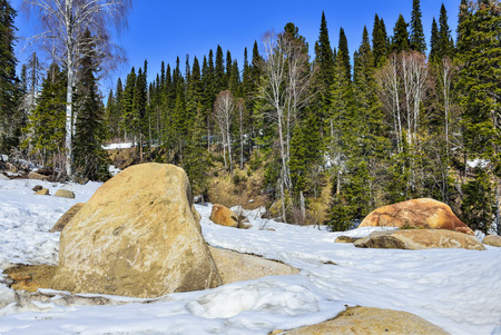 Early spring in mountain coniferous forest. Mountain slope is covered with huge boulders and melting snow. Warm sunny day, bright green forest and clear blue sky - beauty of siberian nature, Russia