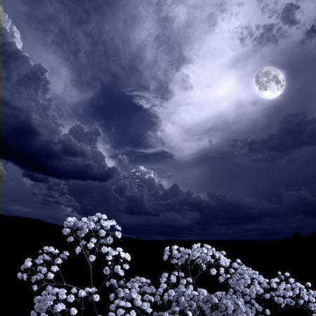 Summer moon night in the blossoming garden. Full moon glowing over white yarrow or milfoil (Achillea ptarmica) flowers. Romantic floral background - beauty in nature concept. Flowers in moonlight