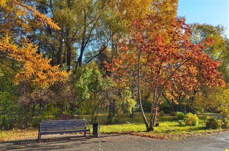 Cozy Corner of autumn park with the bench under rowan tree branches with bunches of red berries