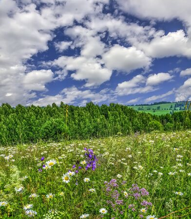 Picturesque summer landscape with blossoming flowers and herbs on top of hill on a blue sky with white clouds background at sunny hot day. Summertime at countryside - beauty of flowering nature