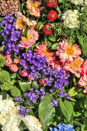 Bright joyful festive multicolor floral background from white peonies, pink roses, purple asters and blue hydrangea with green leaves. Feeling, expressing pleasure and happiness. Beautiful flowers