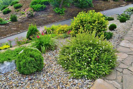 Zwei blühende Sträucher des strauchigen Fingerkrauts (Dasiphora fruticosa} mit weißen und gelben Blüten zwischen Steinen und verschiedenen Zwergkoniferen und Blumen - Landschaftsgestaltung des Gartens auf einem Hügel