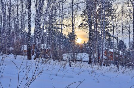 Sunset or sunrise in winter forest at the edge of little village. Golden sunlight among white trunks of birch trees, snowy pines, firs and blue twilight - fairy tale of winter nature, seasonal landscape