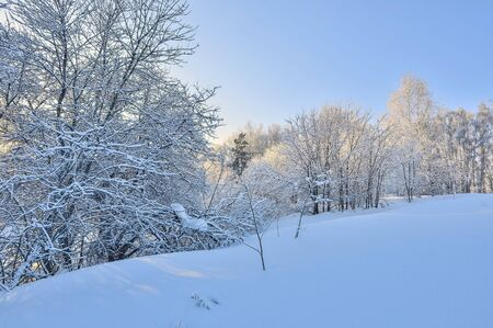 Fabulous beauty of winter landscape - white fluffy snow covered forest on hills, glowing in sunlight lacy branches of trees. Fairy tale of winter wonderland, frost and bright sun beams on blue sky