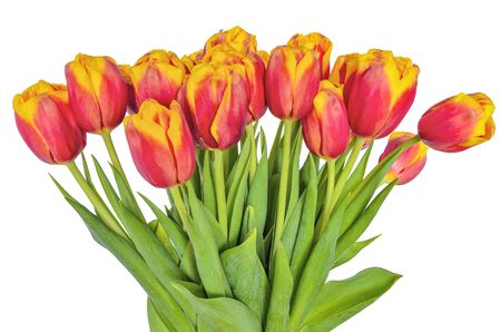 Fresh spring bouquet of red with yellow tulips  on white background isolated. Bright red flowers with yellow edges of petals. Blossoming spring flowers bouquet with green leaves for springtime design Zdjęcie Seryjne
